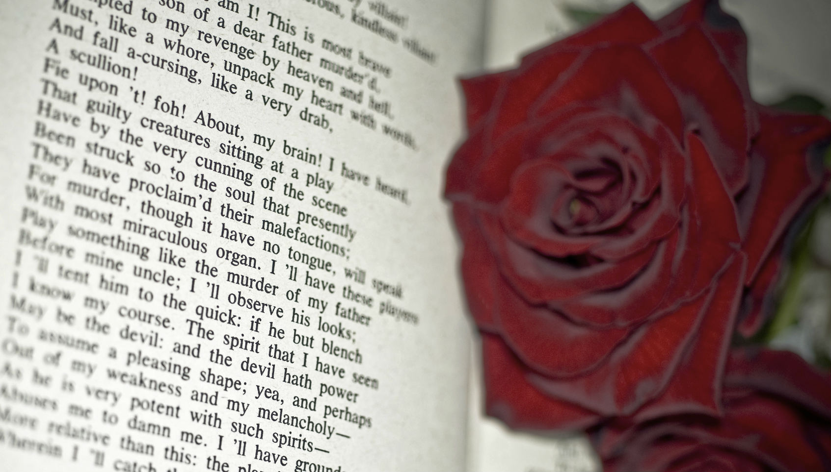 Red Roses on a Book